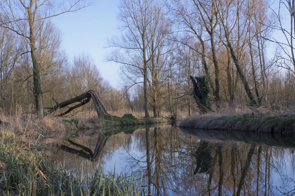 UEA Broad Nature Trail.jpg