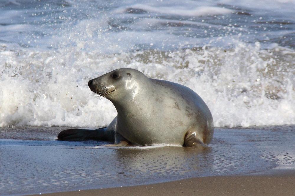 Horsey Seals Photo Gallery