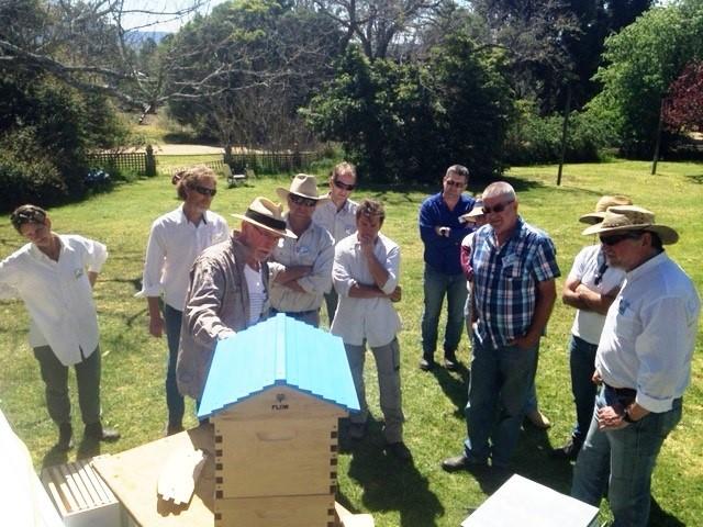 beginning-in-bees.jpg