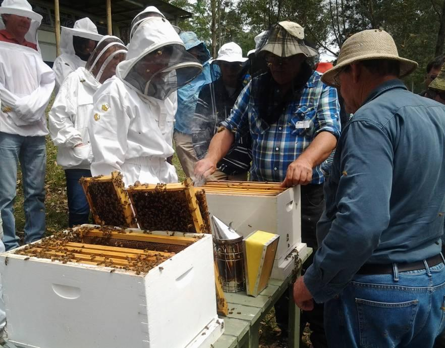 John and Don working on Merridy's hives