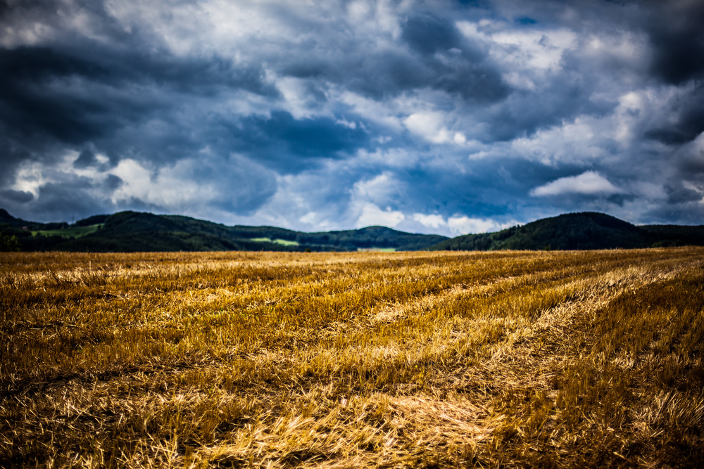 week-27---fields-of-gold_15006230033_o.jpg