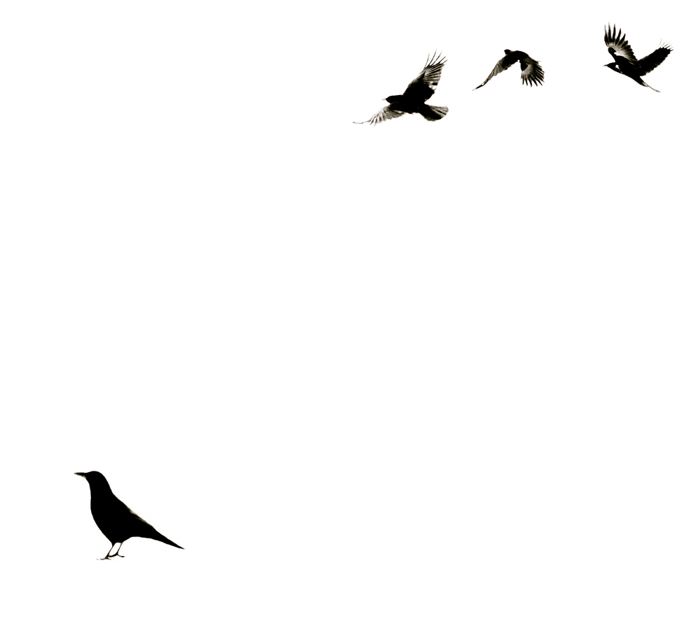 week-49---minimalist-crows_15006185803_o.jpg