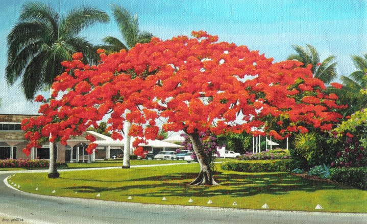 Lyford Cay Bloom.jpg