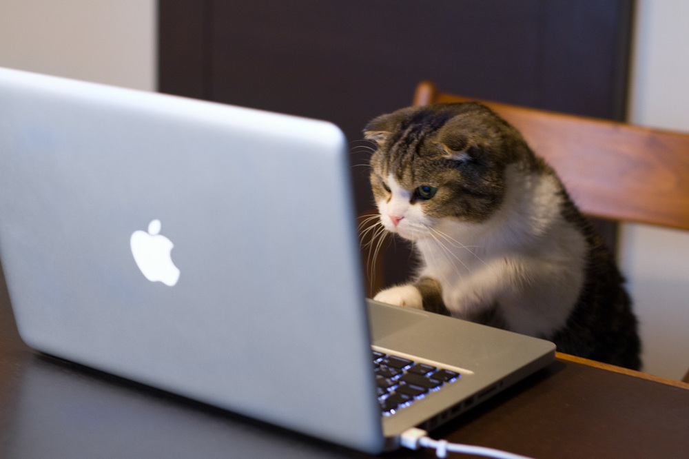 cat_using_computer-computer-cats.jpg