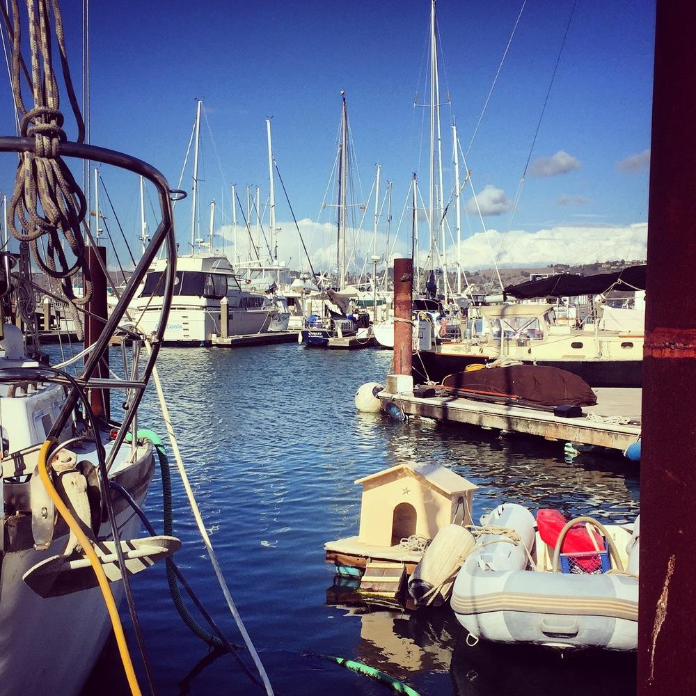 Napa St. Galilee Sausalito Houseboat dogs