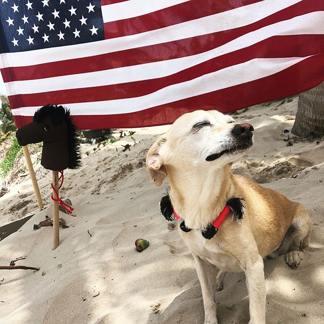 I hope you all enjoyed the 4th as much as Honey did. She played so hard at the beach today that she didn't even object when we buried her in the sand. Oh, and we had fun too. 🇺🇸🇵🇷#belikeHoney #dogdaysofsummer