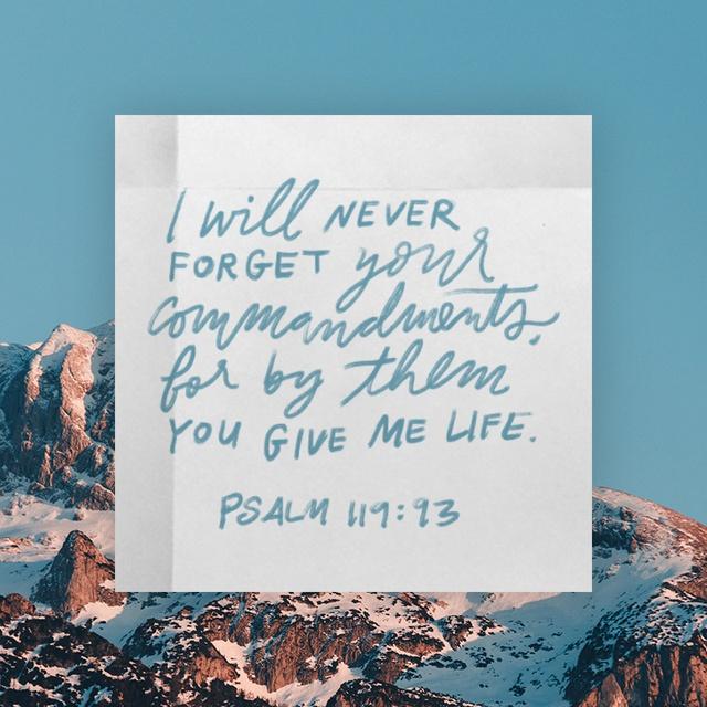 Psalms 119 93 - 640x640.jpg
