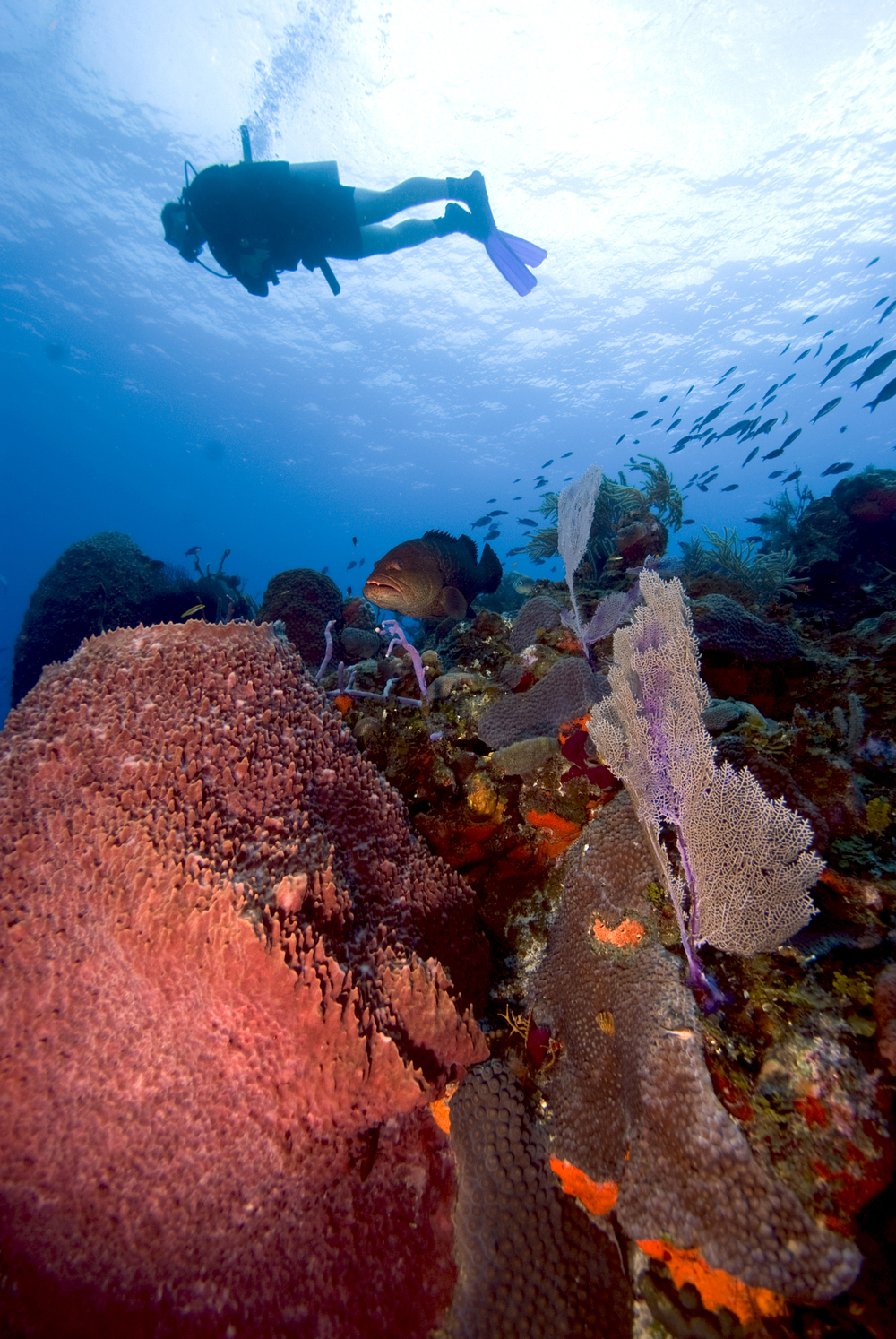 Diver swimming over reef.jpg