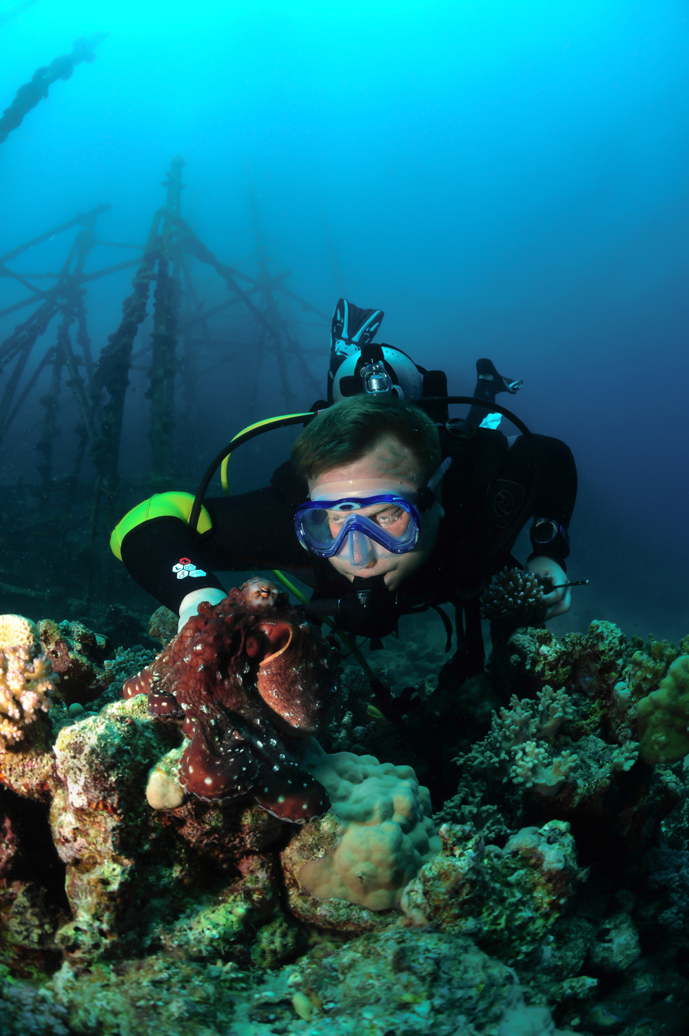 Lisa Collins -Diver with octopus, Marsa Alam, Egypt.jpg