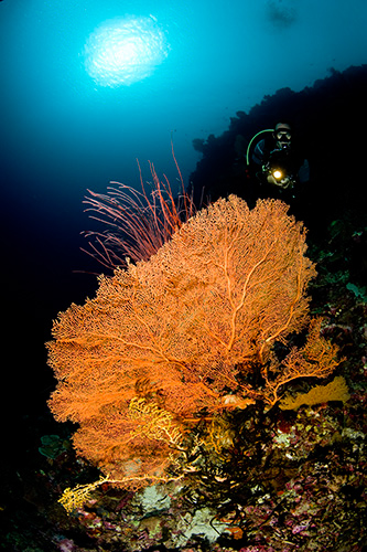Lisa Collins -Reef scene, Wakatobi, Indonesia.jpg