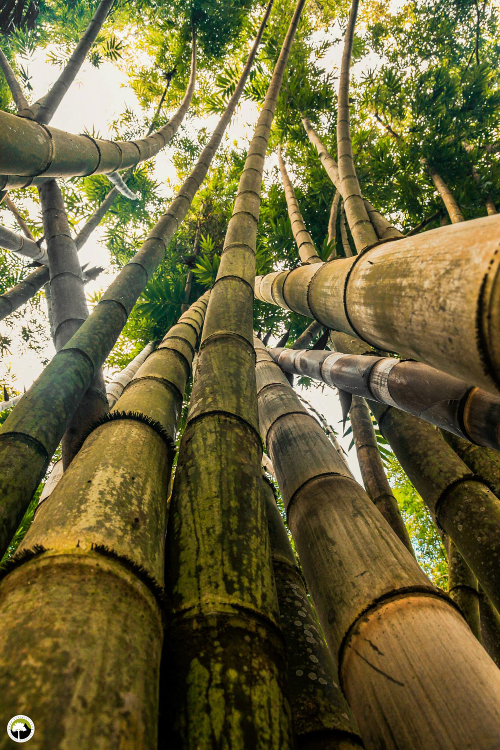 Alex Fux - Bamboo grows four times fast than a standard rainforestkk.jpg