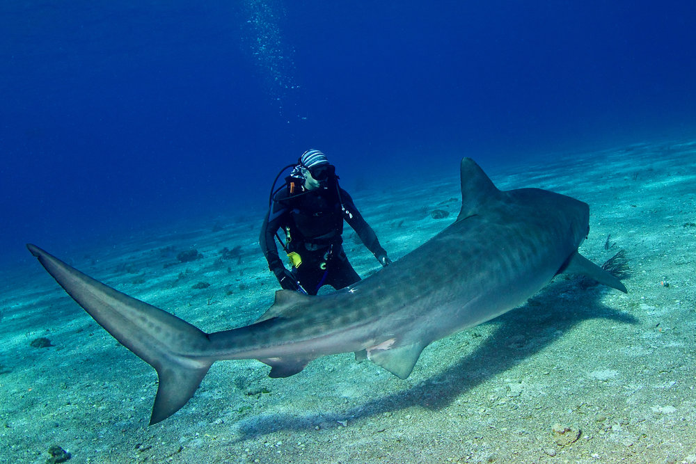 credit.jaydrydenphoto.com - me with tiger shark.jpg