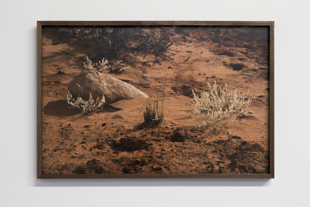 "'Untitled_Plants on sand'   2016 20""x28""     Wood, Archival pigment print mounted on aluminum, Acrylic, Brass, Solid graphite panel."