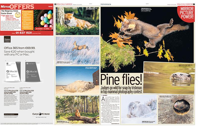David's Mountain Hare - Daily Mirror