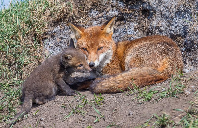 F24 - Cub Seeking Assurance From Mum