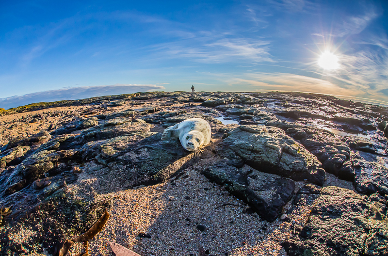 SE2 - Wide-Angle Seal Pup With Evening Sunset