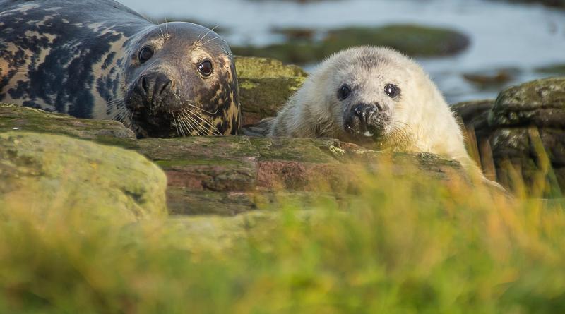SE3 - Mum And Seal Pup