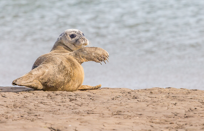 SE4 - Seal-ed With A Wave