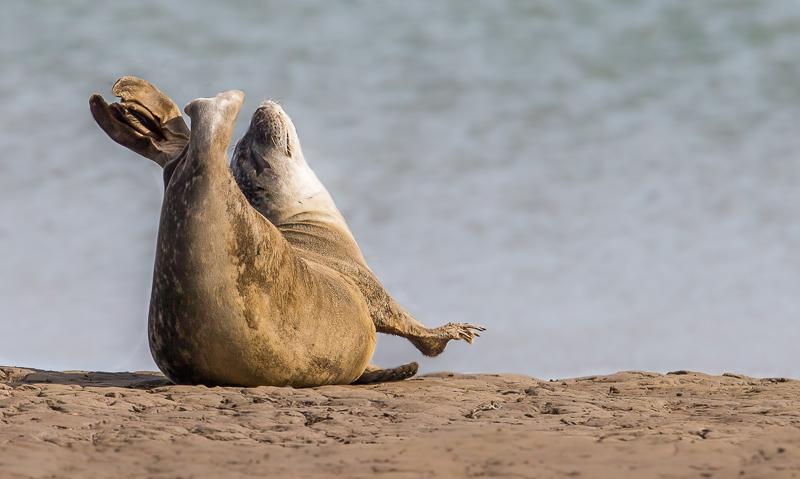 SE6 - Seal Enjoying A Stretch