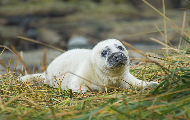 SE9 - Newly Born Seal Pup