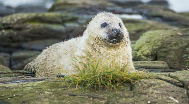 SE14 - Young Seal Pup