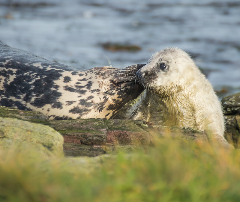 SE16 - Tender Moment Between Mum and Pup