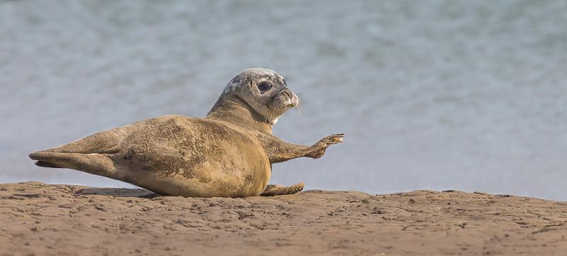 SE21 - Seal Strech