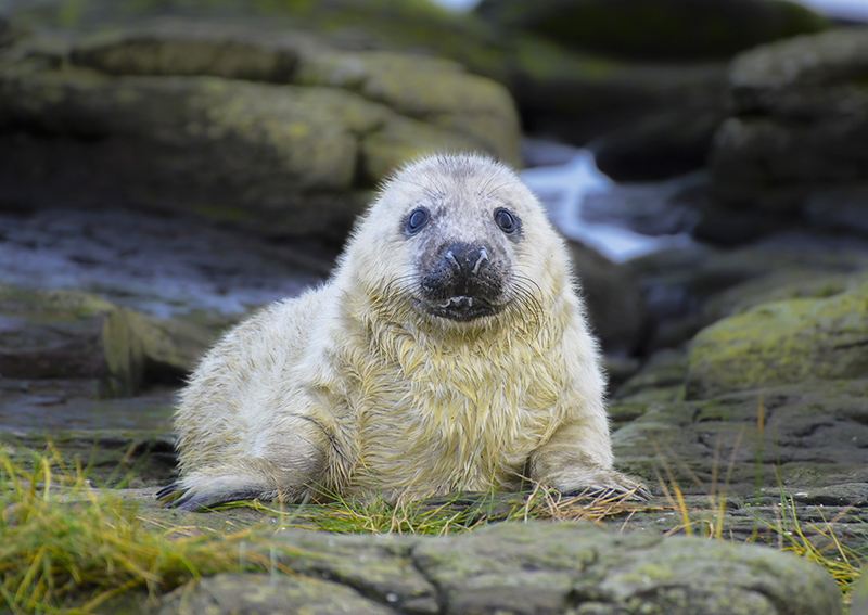 SE17 - Young Seal Pup