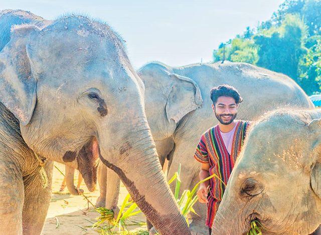 When you tell a corny joke and your friends find it funny. . . . . #elephantsantuary #elephants #chiangmaithailand #chiangmai #nikond800 #elephantlove #travelthailand #thailand🇹🇭 #northernthailand #ourlonelyplanet