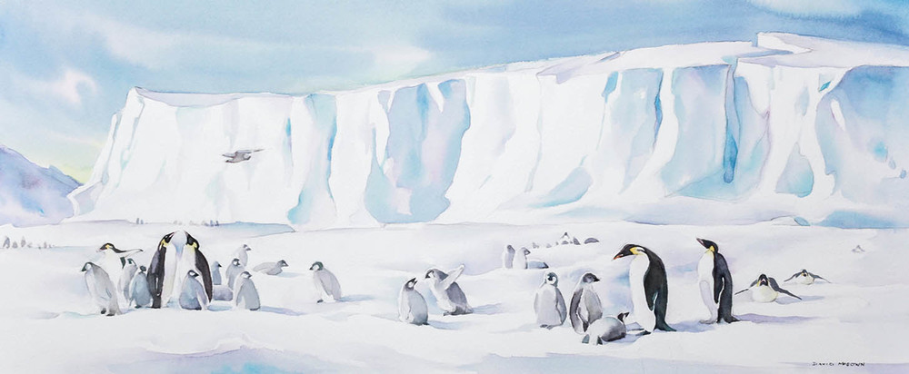 Auster Emperor penguin Rookery