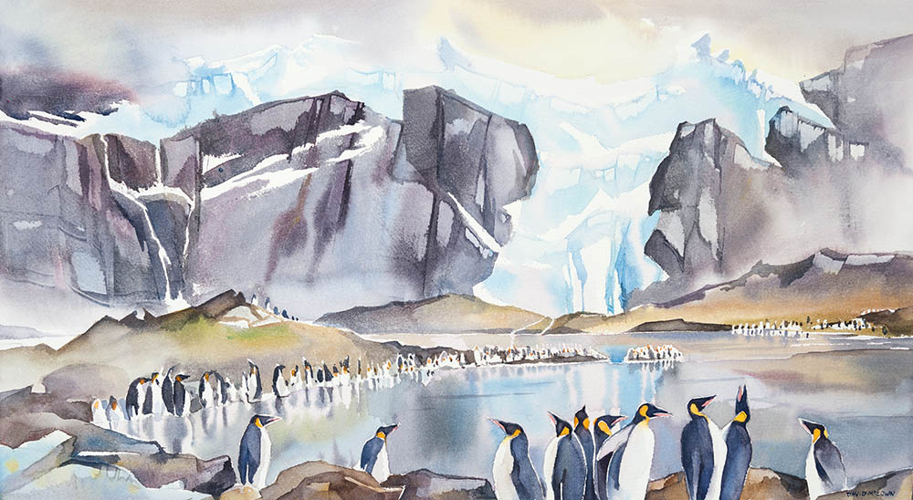 King Penguin Rookery