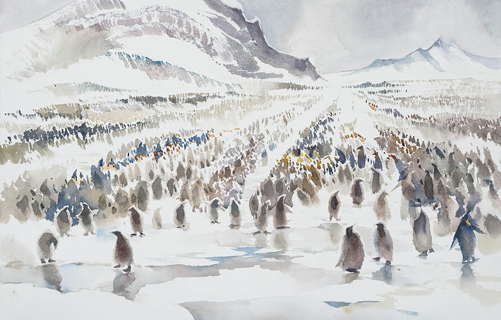 Salisbury Plain King Penguin Rookery