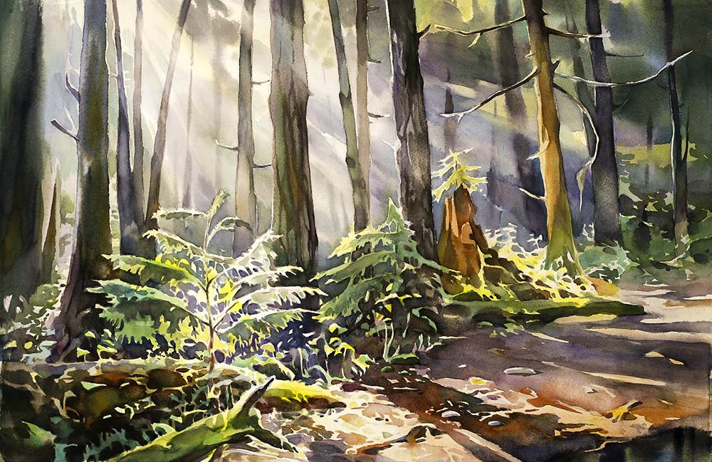 Pacific Spirit Forest, study n.2