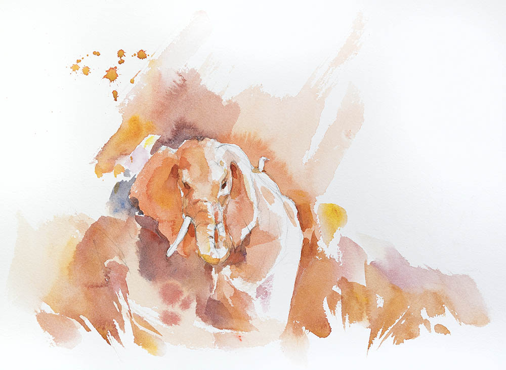 African Elephant study n. 1