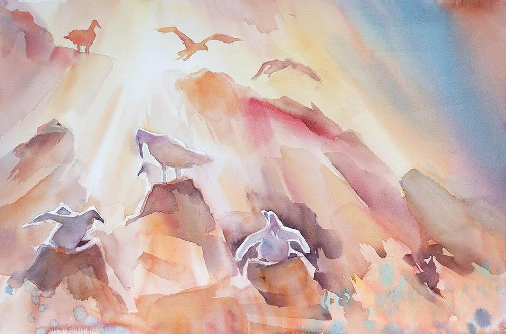 Albatross sunset
