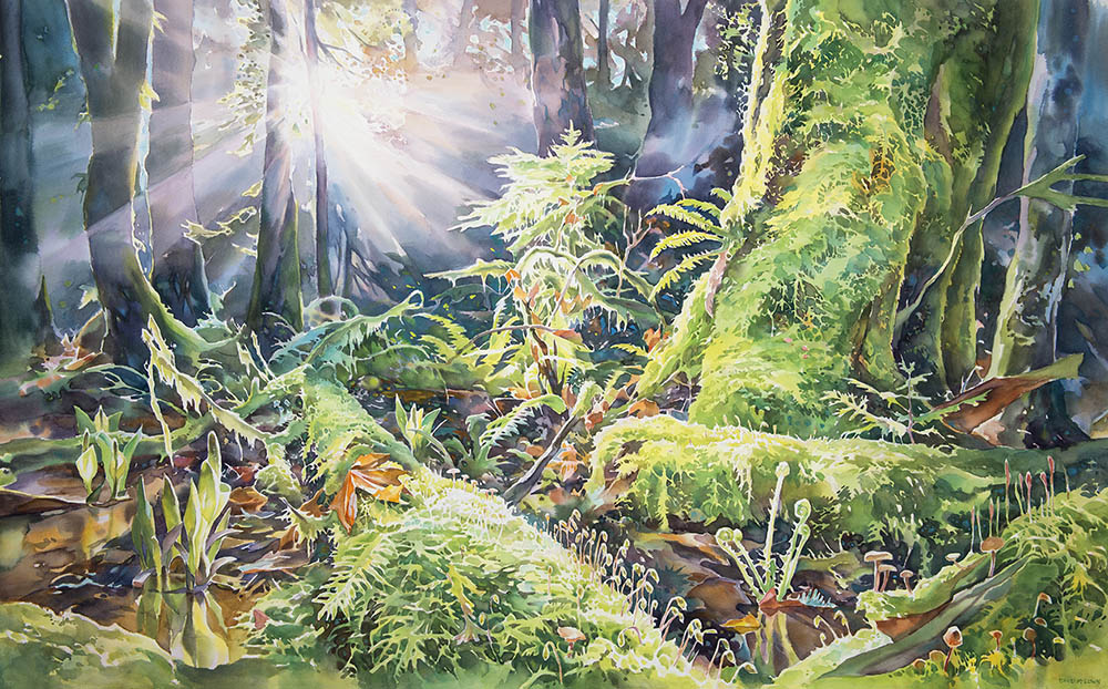 Spring in the Pacific Spirit Forest