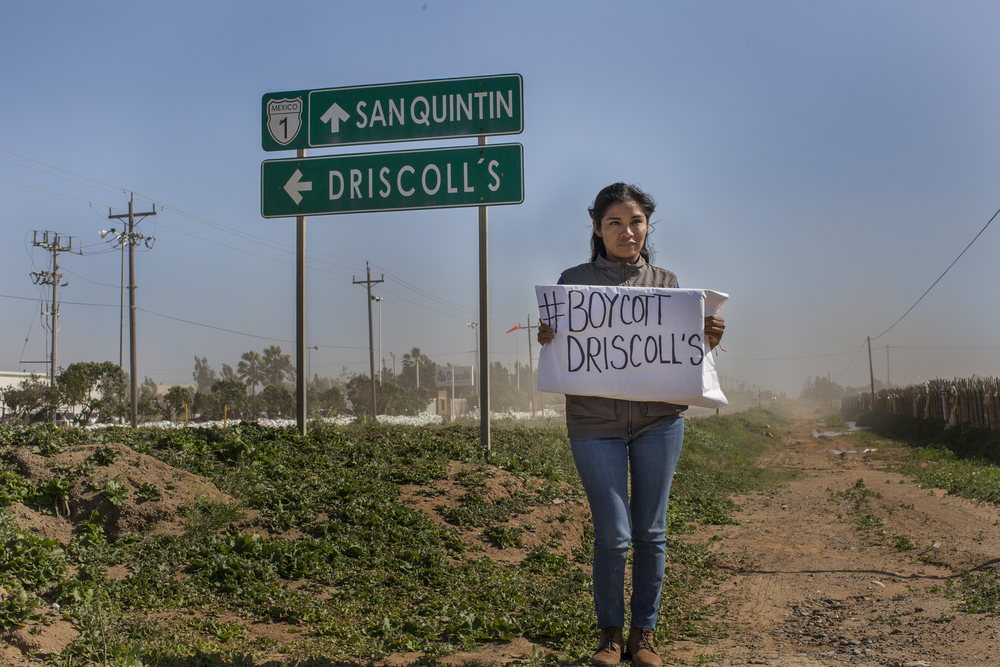 Gloria Gracida, spokesperson for the laborers, holds a sign that calls for a boycott of Driscoll's products in front of the company's plant in San Quintín. (Griselda San Martin)