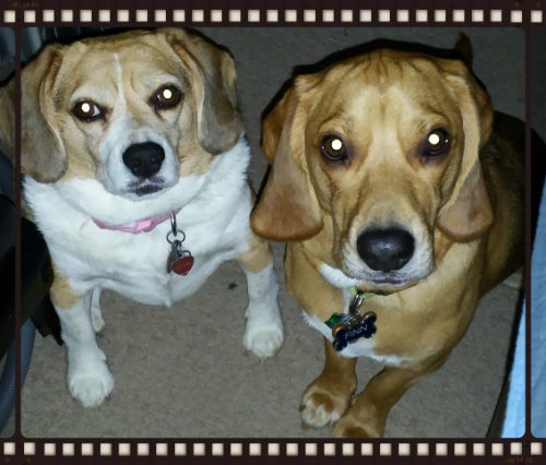 Beagles who love to help us game!