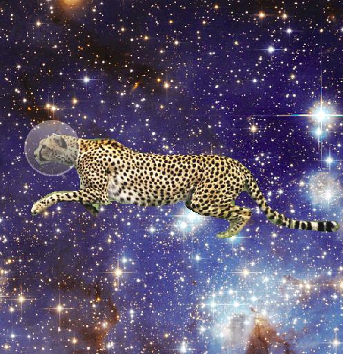space_cheetah