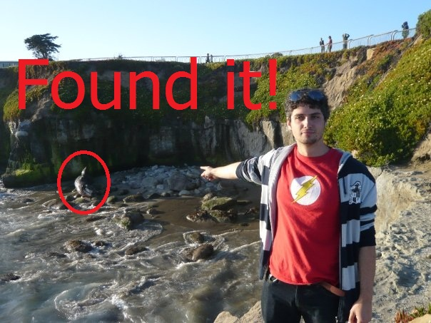 The time Ryan found a Gray Whale.