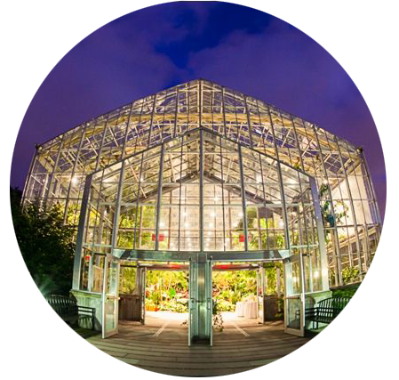 greenhouse at night.png