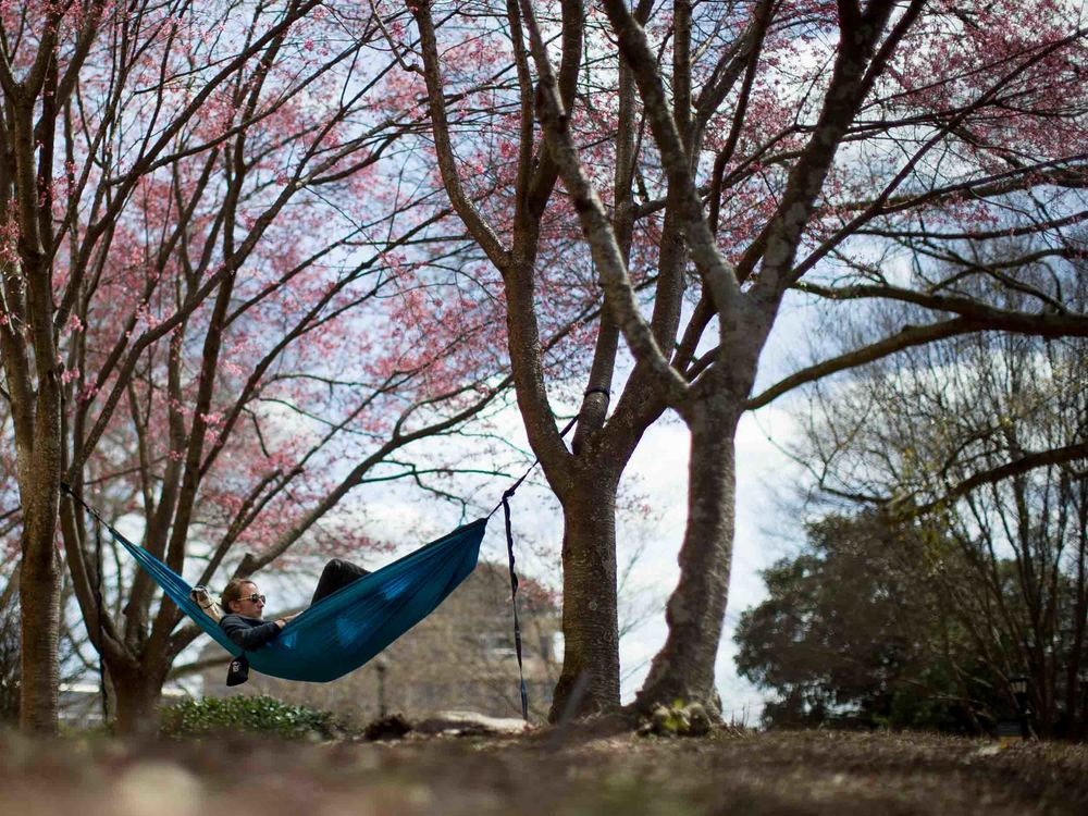 A Kennesaw State University relaxes in a hammock on campus on warm day, Thursday, March 10, 2016, in Kennesaw, Ga.