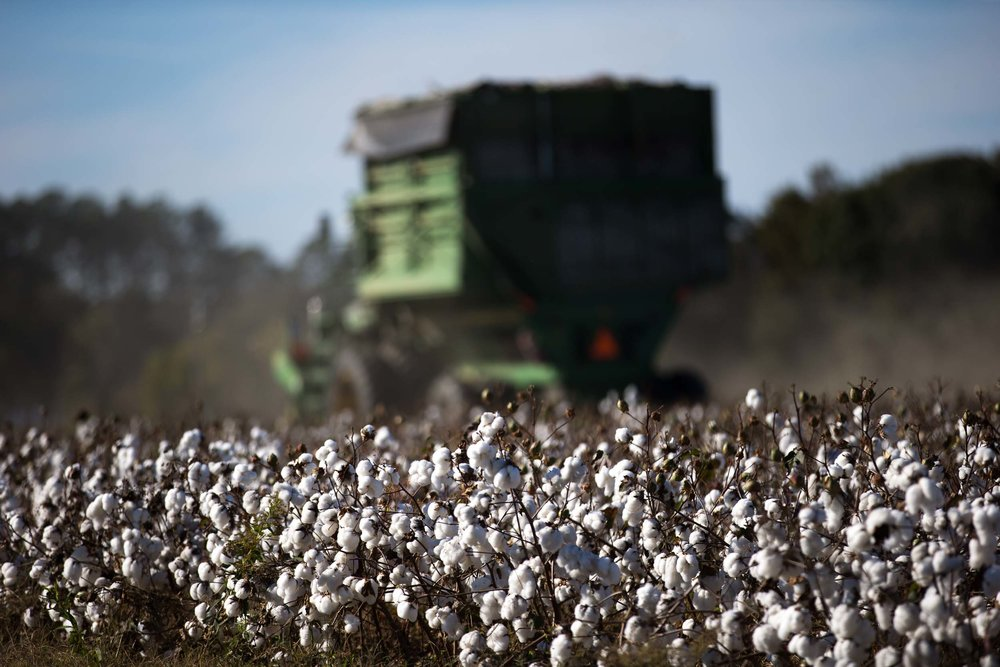 On our way to Douglas, Georgia, we made a stop to watch farmers work in the cotton fields.