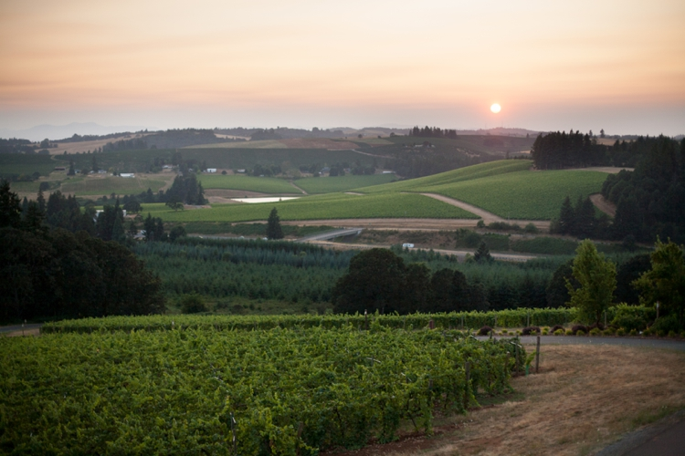 sunset view from willamette valley vineyards in salem, oregon