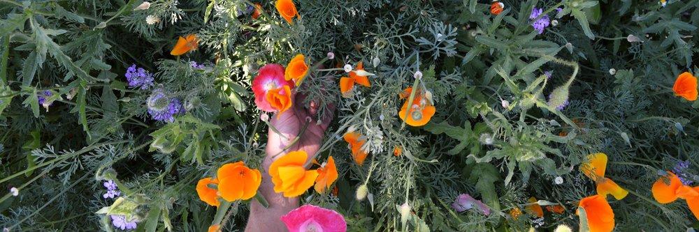 threepartflowers.jpg