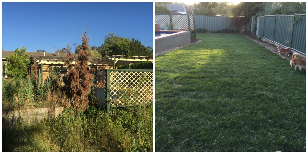 Before & After Shot of the yard, next to the pool.