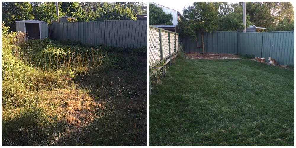 Before & After at the Back. Chicken Coop to come!