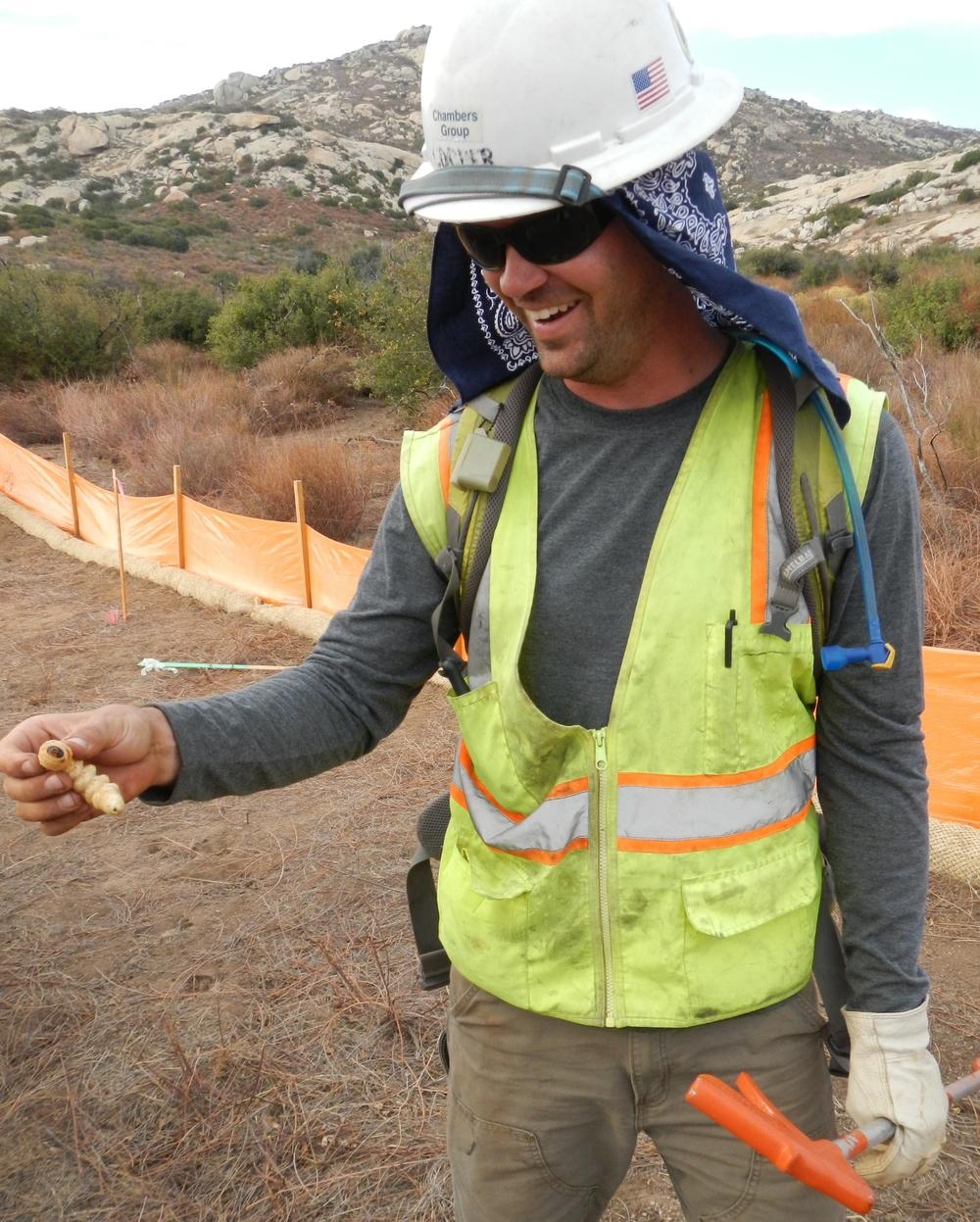 Prionus root borer larvae, Potrero, CA