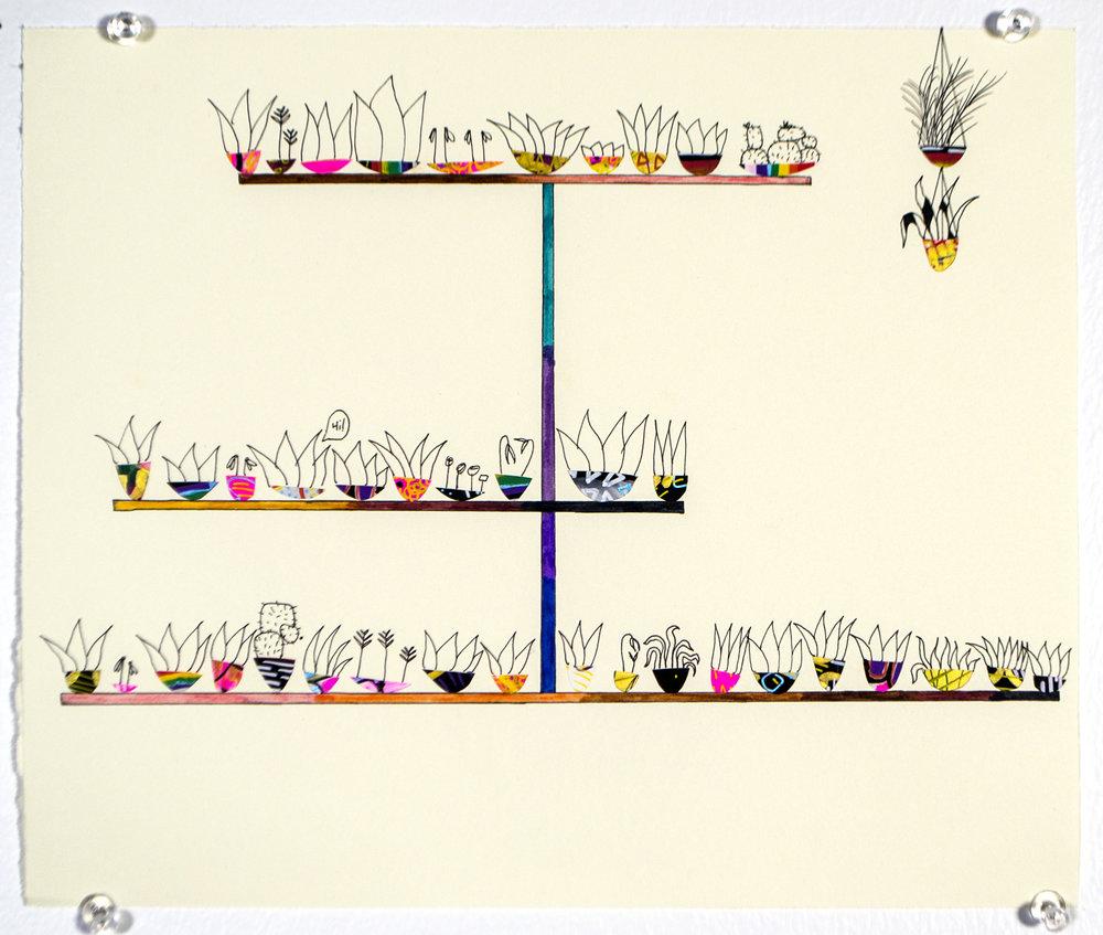 quick_colorful_plants.jpg