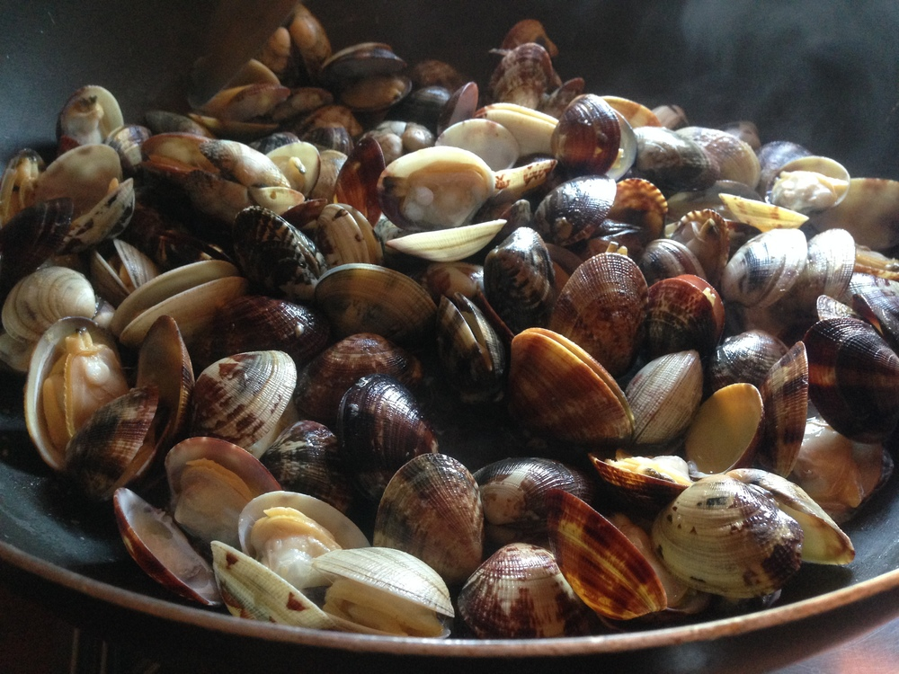 Clams opening